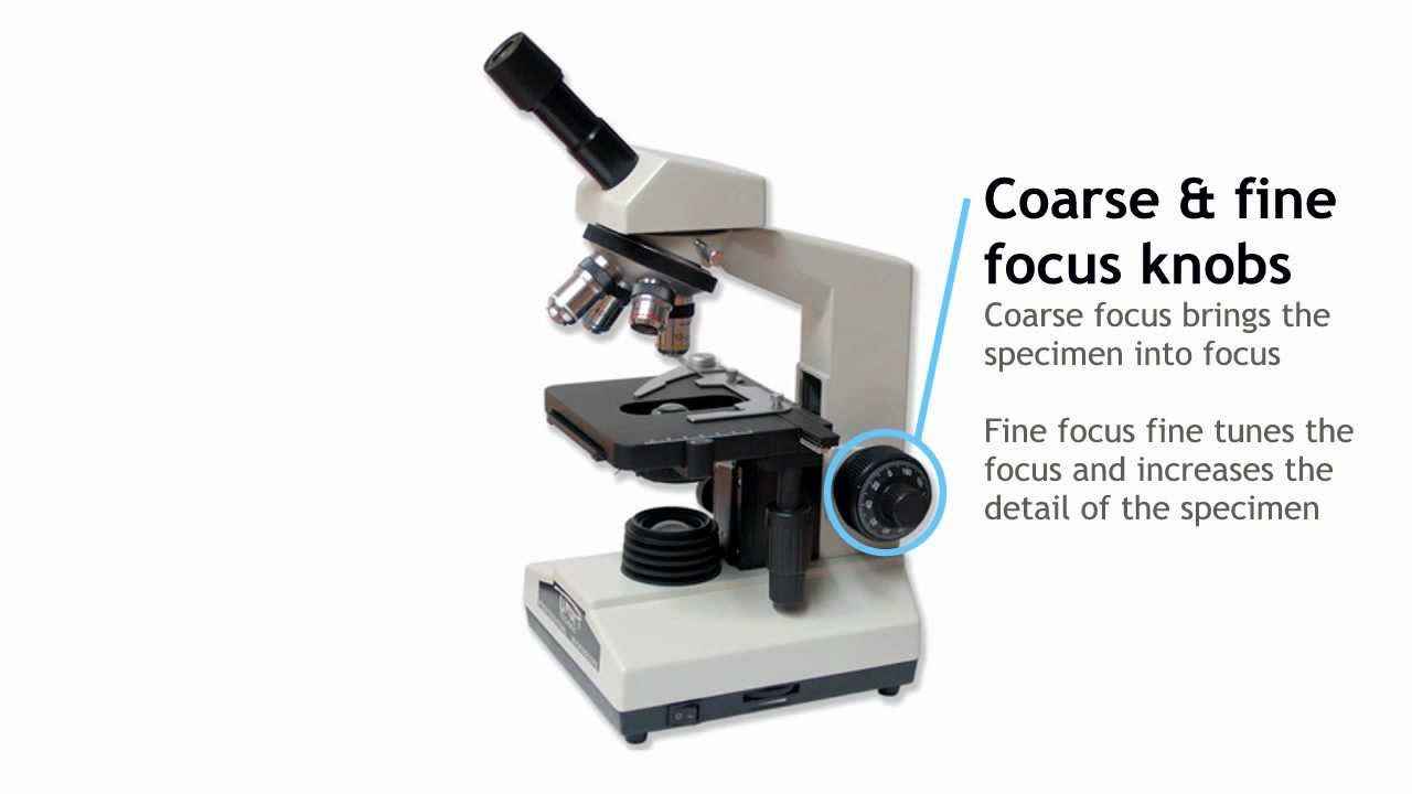 Microscops - Components of Light Microscope
