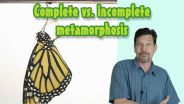 Insects - Metamorphosis