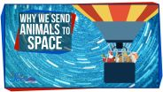 Spaceflight - Animals in Space