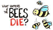 Honey Bee - Contribution to Ecosystem