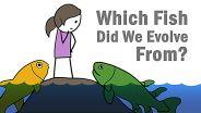 Evolution - Evolution of Fish