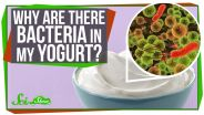 Bacteria - Food