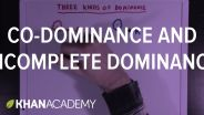 Genetics - Dominance