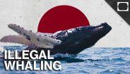 Whaling - Japan