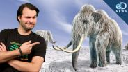 Woolly Mammoth - Cloning Possibilities