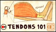 Musculoskeletal System - Tendon
