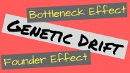Evolution - Genetic Drift