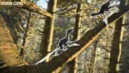 Epidexipteryx - Feathers