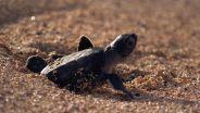 Turtle - Survival