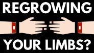 Limb Regeneration