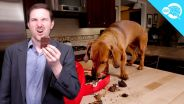 Chocolate Poisoning - in Dogs