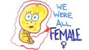 Genetics - Sexual Differentiation