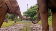Elephant - Teamwork