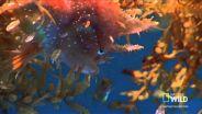Sargassum Fish