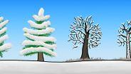 Tree - Evolutionary History