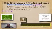 Photosynthesis - NADPH