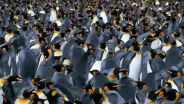 Penguin - Monitoring from Space
