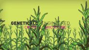Genetic Engineering - GMO Disadvantages