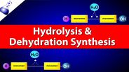 Chemistry - Hydrolysis and Dehydration Synthesis