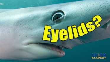 Shark - Eyesight