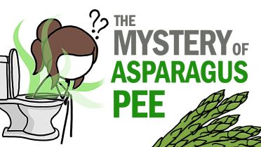 Asparagus - Effects on Urine