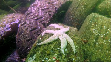 Sea Stars - Danger of Extinction