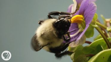 Bumblebee - Buzzing