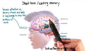 Memory - Short-Term Memory