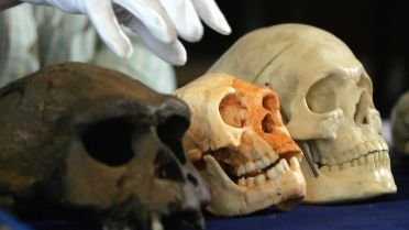 Homo Floresiensis - Scientific Research
