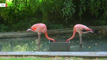 Flamingo - Legs