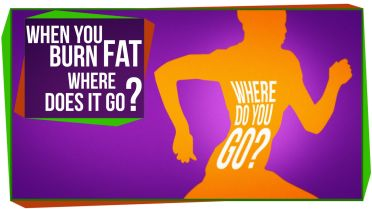 Fats - Body Fat