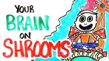 Psilocybin Mushroom - Effects