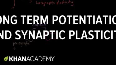Memory - Long Term Potentiation and Synaptic Plasticity