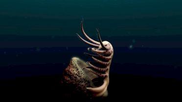 Ovatiovermis Cribratus - Discovery