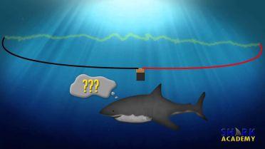 Shark - Electrosensory System
