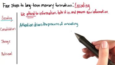 Memory - Long-Term Memory Formation