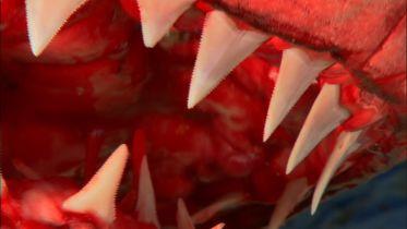 Great White Shark - Bite Force