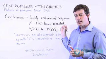 Chromosome - Centromere