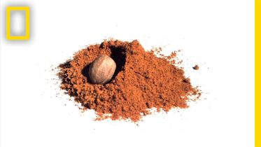 Nutmeg - 17th Century Trade
