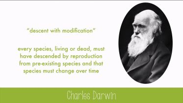 Evolution - History of Evolutionary Theories