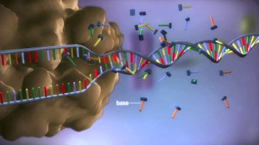 DNA - From DNA to Protein