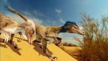 Dinosaur - Origin of Birds