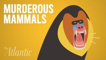 Mammals - Violent Behavior