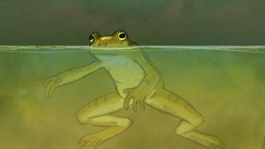 Frog - Danger of Extinction
