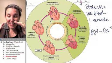 Heart - Stroke Volume