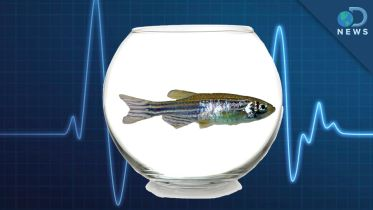 Zebrafish - Scientific Research