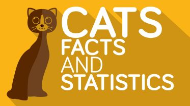 Cat - Facts