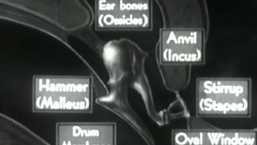 Ear - Physiology of the Middle Ear