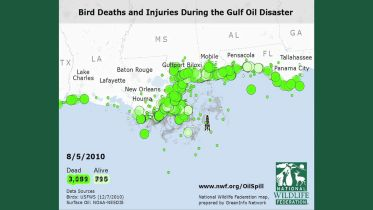 Deepwater Horizon Oil Spill - Impacts on Birds