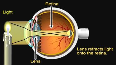 Eye - Physiology
